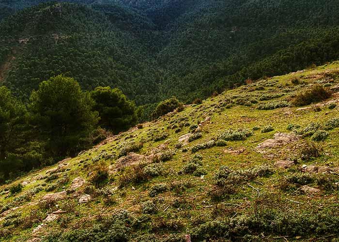Murcia lanza una App para conocer su oferta de turismo rural