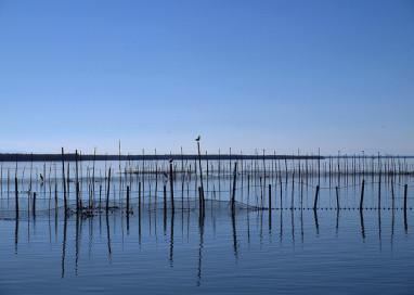 Dos imputados por delitos medioambientales en La Albufera