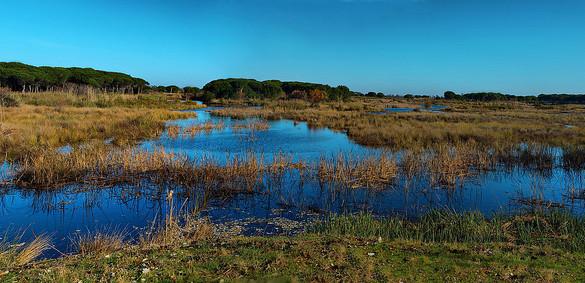 El Parque Nacional de Doñana, amenazado por el cambio climático