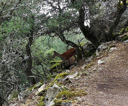ecologistas monterias monfrague
