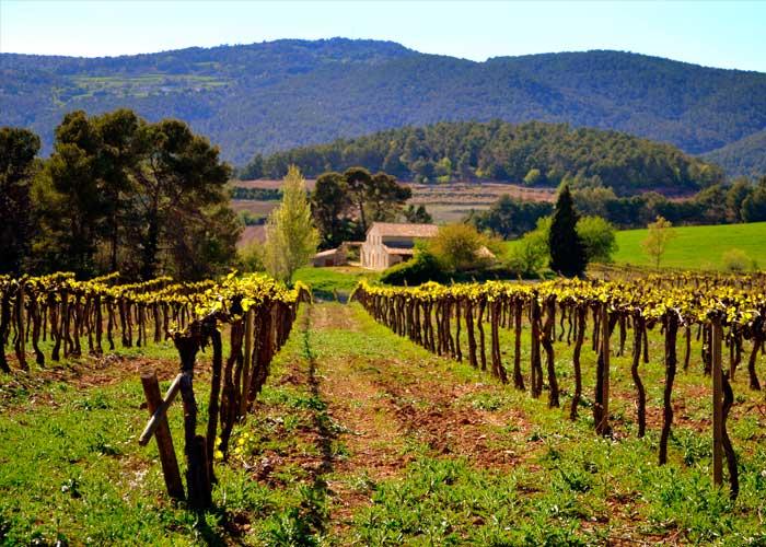 """El Penedès tendrá la primera """"carretera del vino"""" en España"""