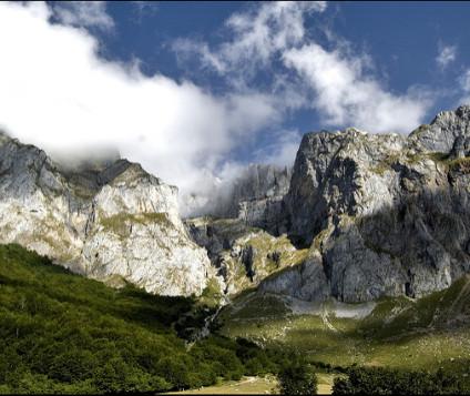 pintura naturalista picos europa