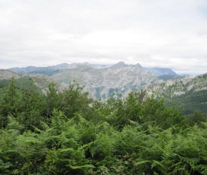 ponga-asturias