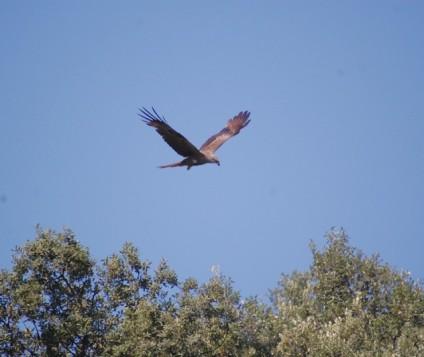 aves-monfrague