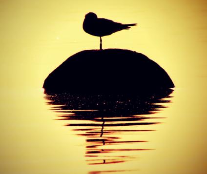 aves-malaga