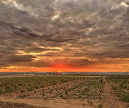Viñedos en La Mancha