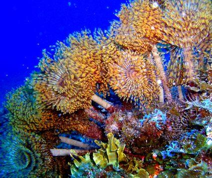 fondo marino de El Hierro, en Canarias