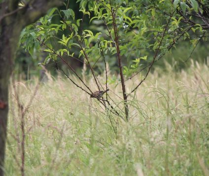 Langreo promociona su zona rural - naturaleza