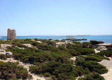 El Parque Natural de ses Salines necesita más protección