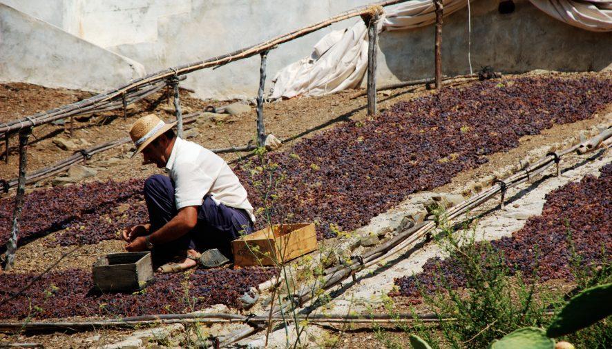 Rutaxar, una ruta para conocer la uva pasa