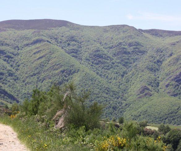 Galicia creará rutas gastronómicas en el Camino de Santiago Francés