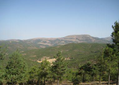Comienza la restauración forestal del Parque Natural de Baza