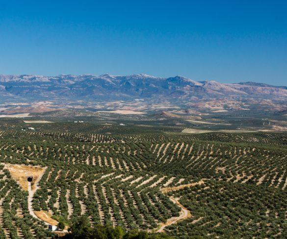 """Resultado positivo en la XVI edición de  la Feria de Turismo Interior de Andalucía """"Tierra Adentro"""""""