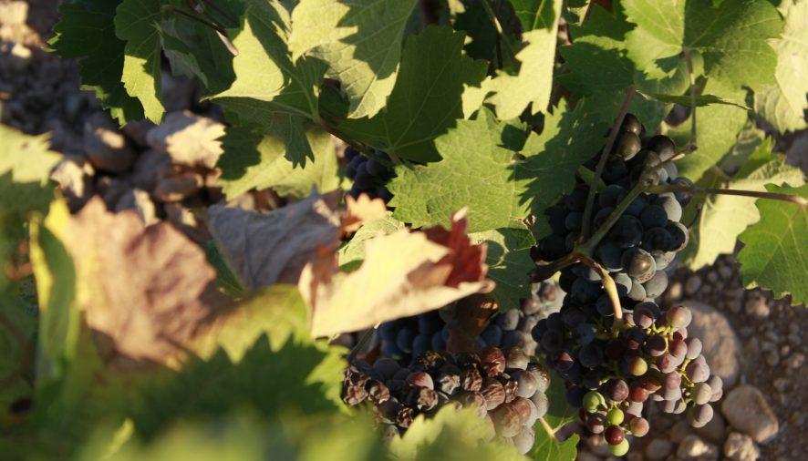 Este jueves se presentan los mejores vinos de Jumilla