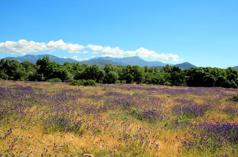 El Parque Nacional de la Sierra de Guadarrama uno de los lugares favoritos para los turistas.