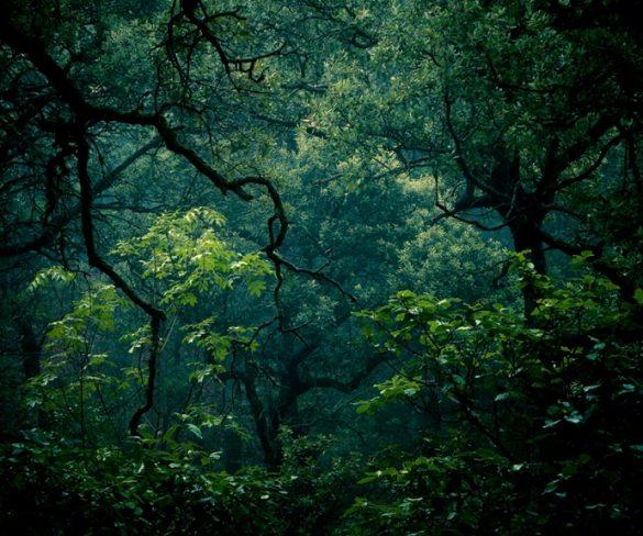 El Parque Natural de la Font Roja foco de estudio sobre el cambio climático - naturaleza