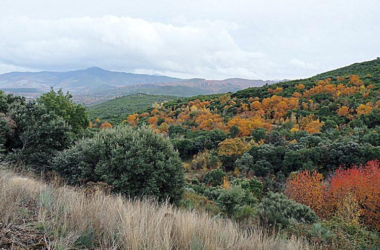 """El Bierzo impulsa su riqueza natural con la iniciativa """"Foresta y Templarios del Bierzo"""""""