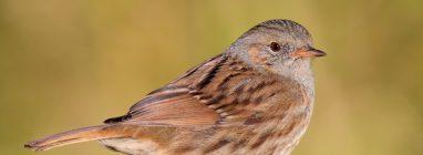 La Diputación de Málaga presenta la web de turismo ornitológico Birding Málaga. - naturaleza